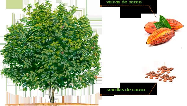 Imagen del árbol del cacao